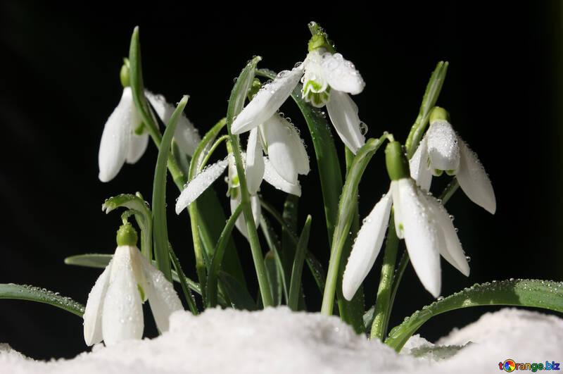 Fiori d`arte di clip nella neve №38259