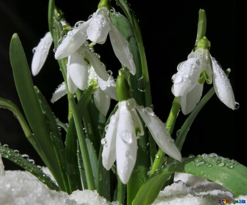 Imágenes prediseñadas de flores №38358