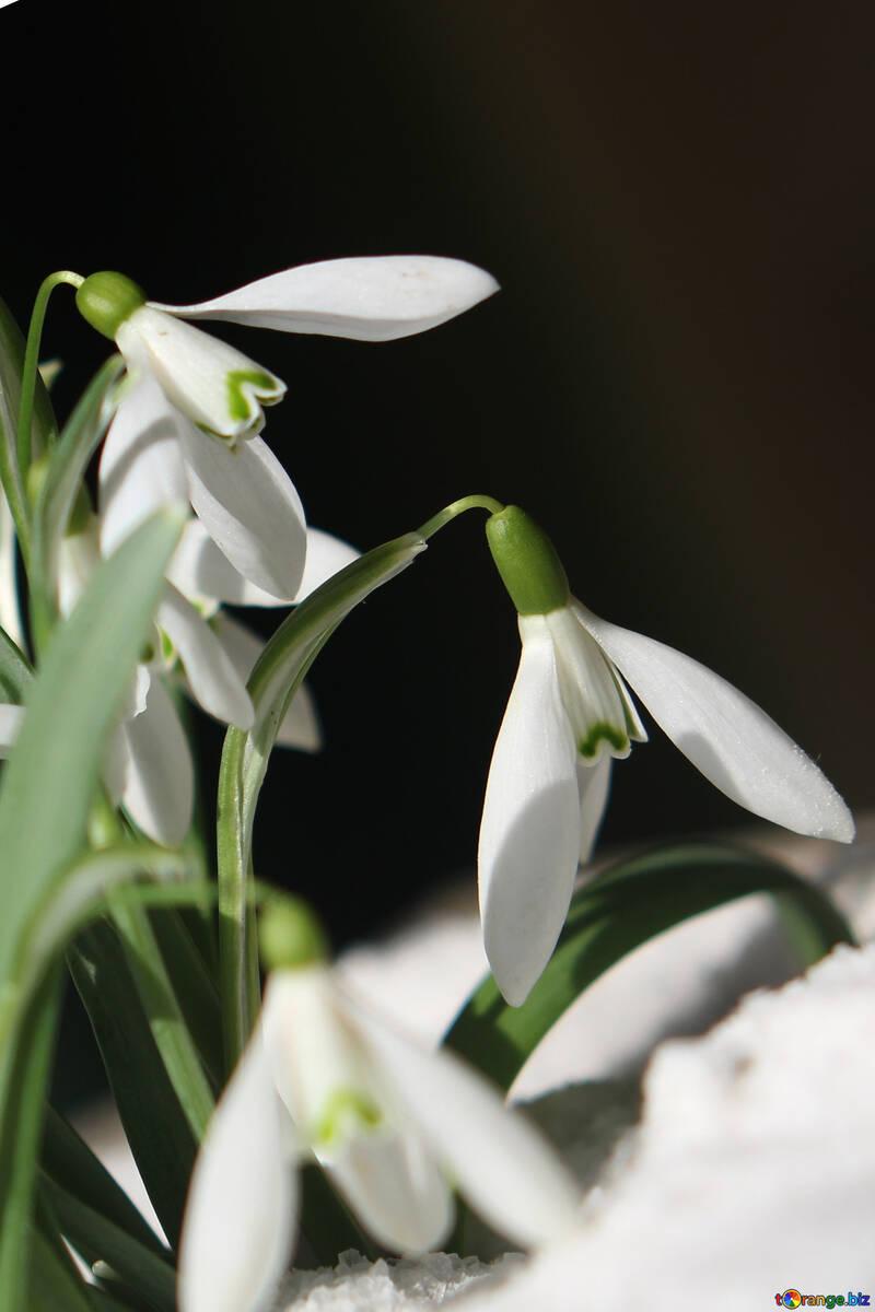 Blumen auf Postkarte №38306