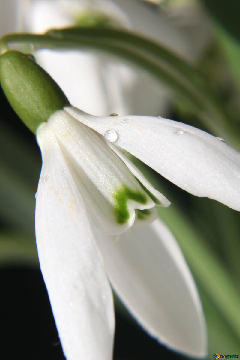 Delicate flower №38289