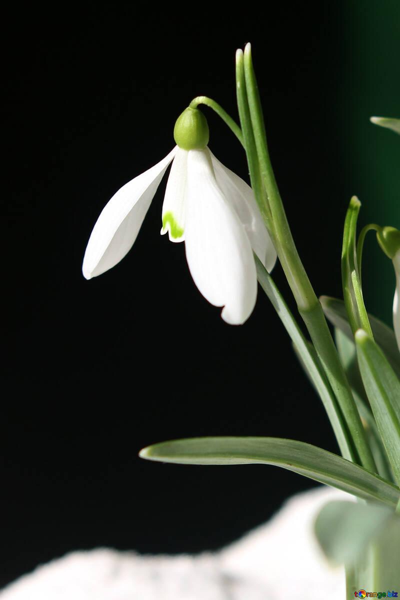 Flor №38300