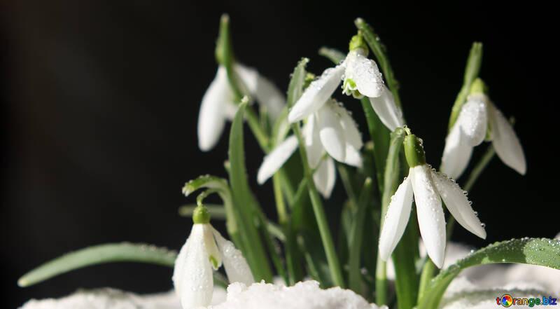 Фото весна №38264