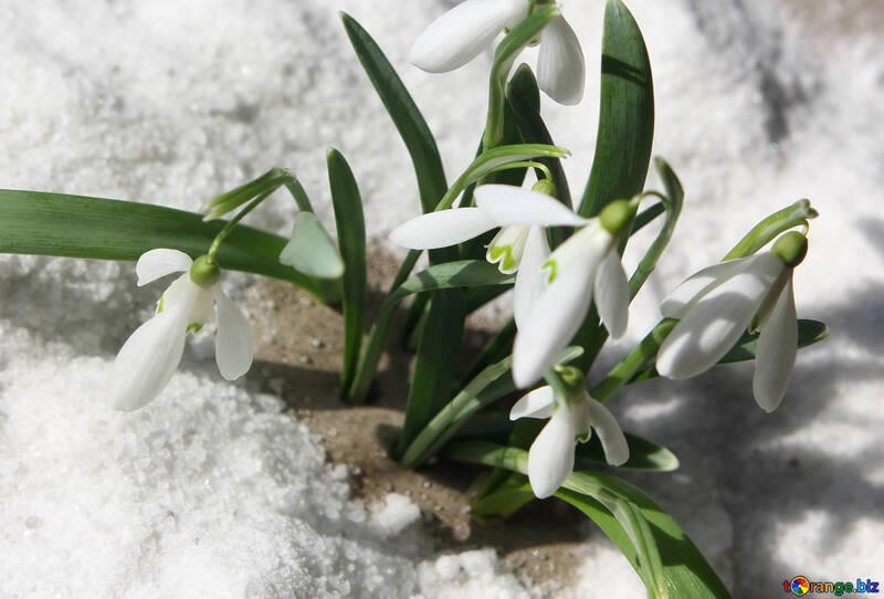 Bilder von Frühjahr №38320