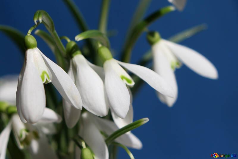 Sfondi Blog dei fiori №38337