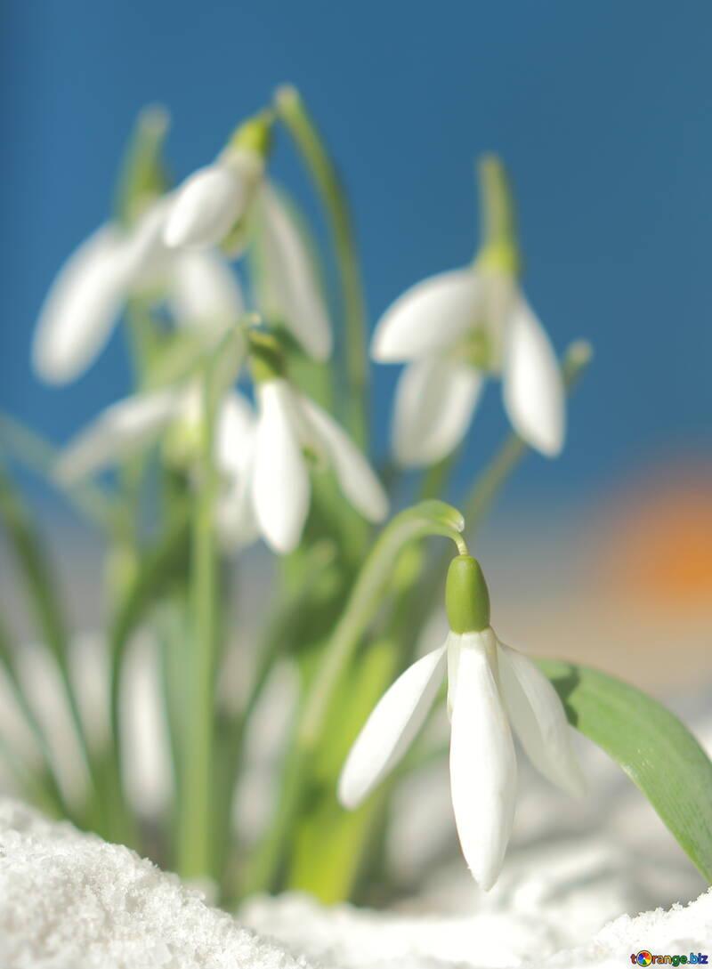 Bellissimi fiori №38251