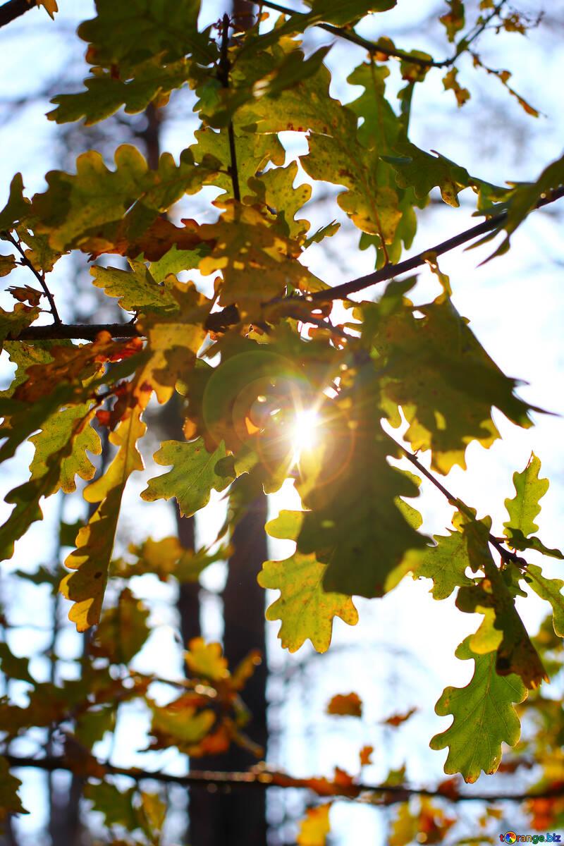 Leaves №38515