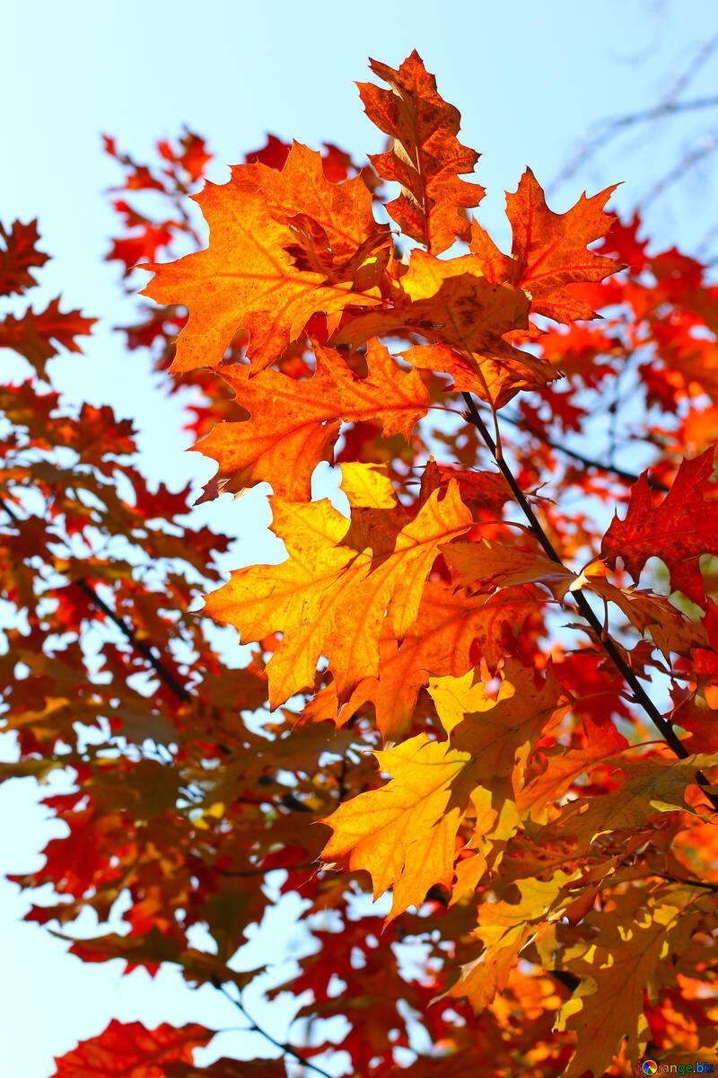 Beautiful autumn leaves №38534