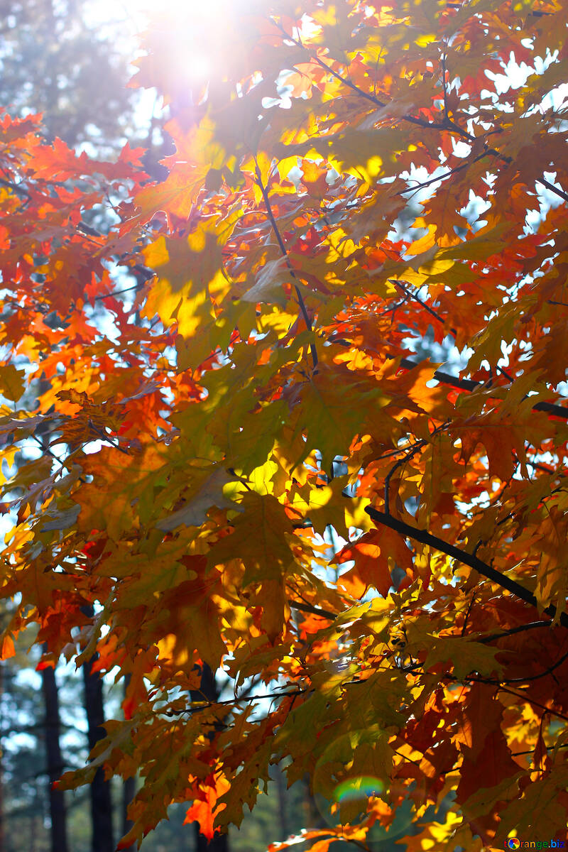 Autumn forest №38543