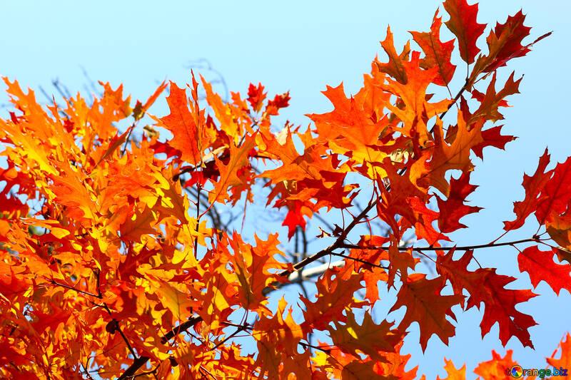 Die Blätter auf dem Cover von Facebook №38533