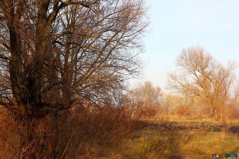 Autumn nature №38616