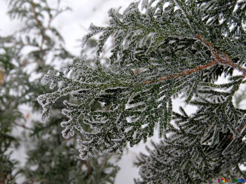 Raureif Auf Einem Zweig Schone Reim Schnee 38179