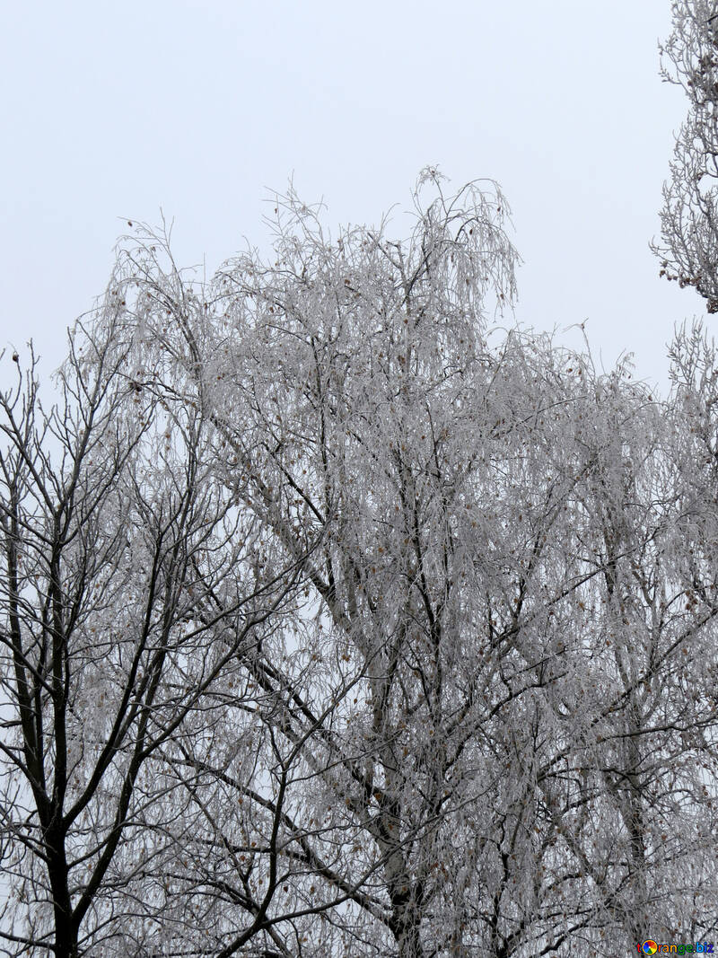 Winter trees covered with rime №38079