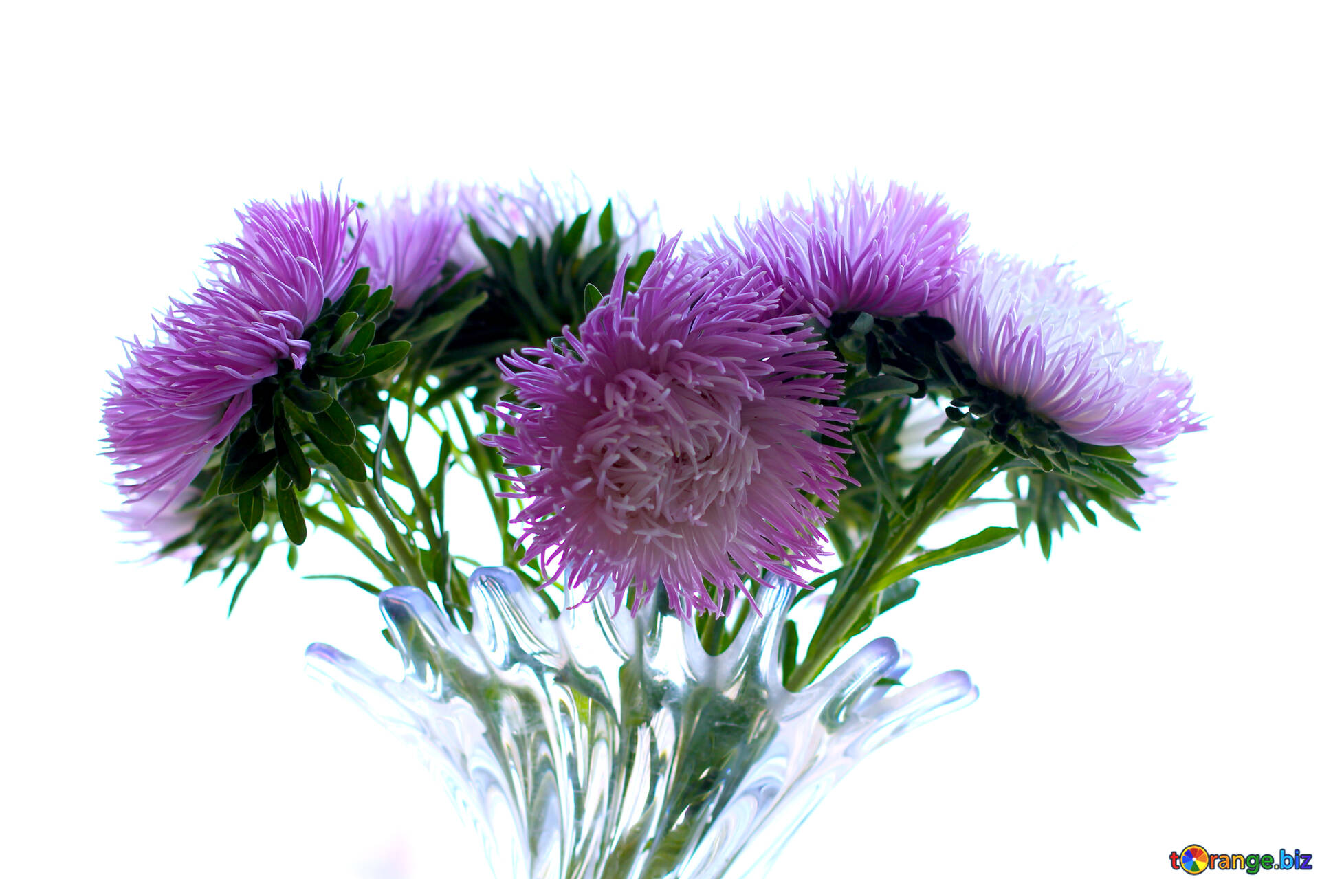 Bouquet Of Asters A Bouquet Of Flowers On White Background Bouquet