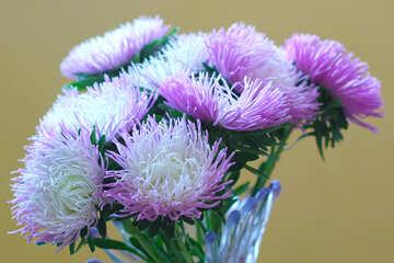 Astri autunno bouquet №39594