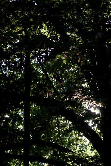 Dense foliage №39651