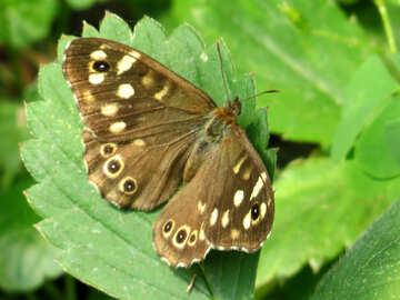 Butterfly №39821