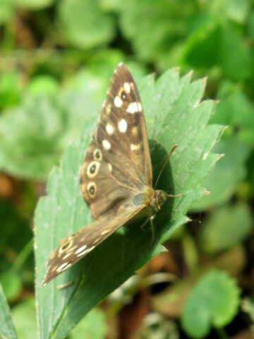 Butterfly №39824