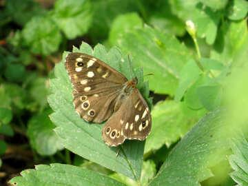 Gray butterfly №39820