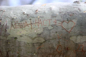 An inscription carved on tree №39908