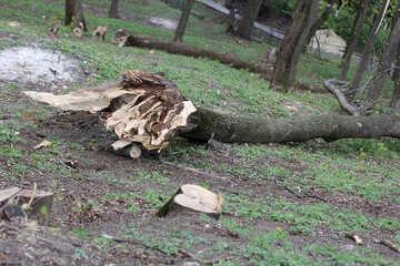 Fallen trees №39874