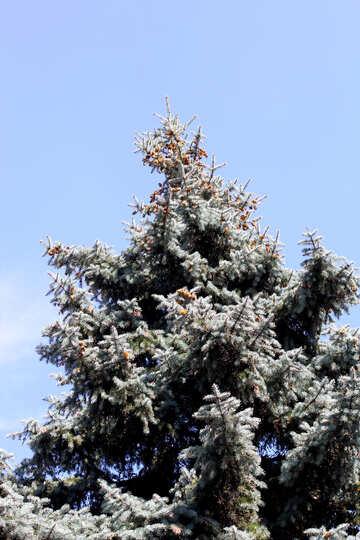 Christmas tree against the sky №39609
