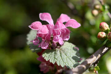 Little flower №39755