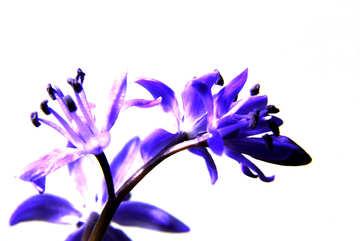 Bright flower background №39007