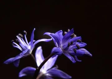 A dark background with flower №39006