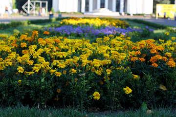Blumenbeet Blumen Ringelblumen №39635