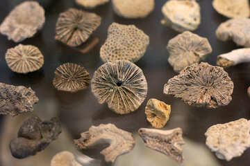 Fossils №39416