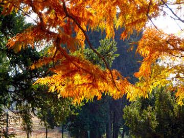 Autumn foliage №39150