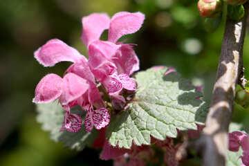 Macro pink flower №39754