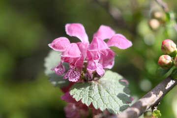 Macro Spring Flower №39757