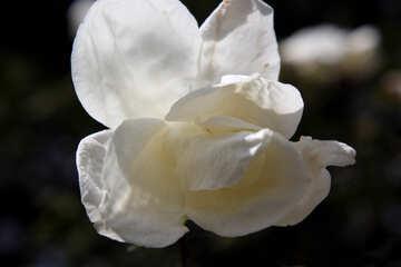 Macro white flower №39689