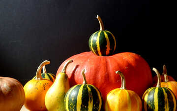 Background with pumpkins №39154