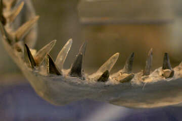 Ancient shark teeth №39396