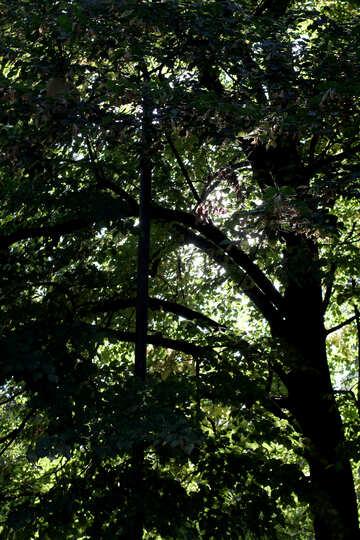 Shade from trees №39647