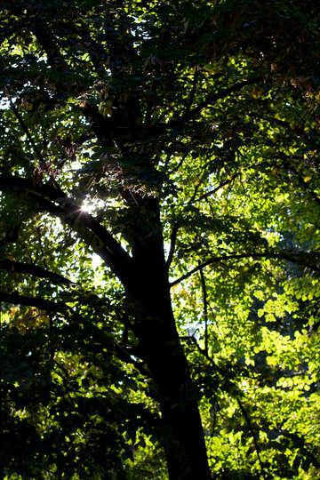Shady forest №39649