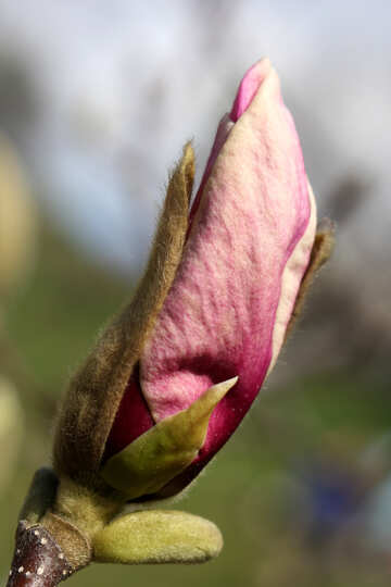 Velvet bloom spring №39726