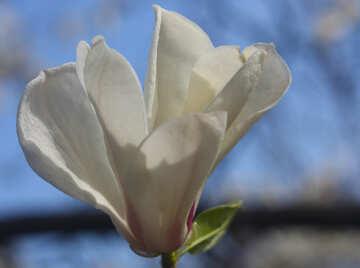 Delicate spring flower №39700