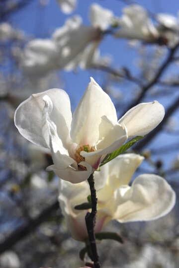 Fragrant flower №39711