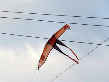 Kite entangled in wires №39246