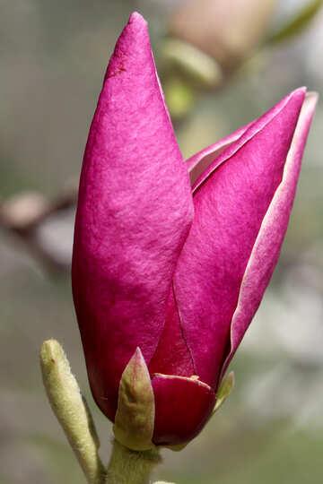 Velvet Spring Flower №39740