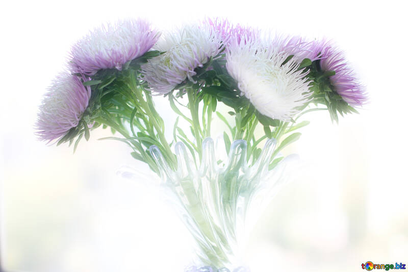 Light background with asters №39602