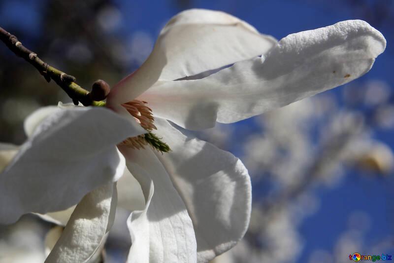 Аромат весны фон для открытки №39693