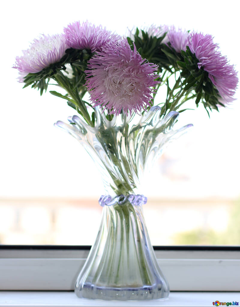 Bouquet Of Asters Bouquet Of Flowers In Vase Glass 39598