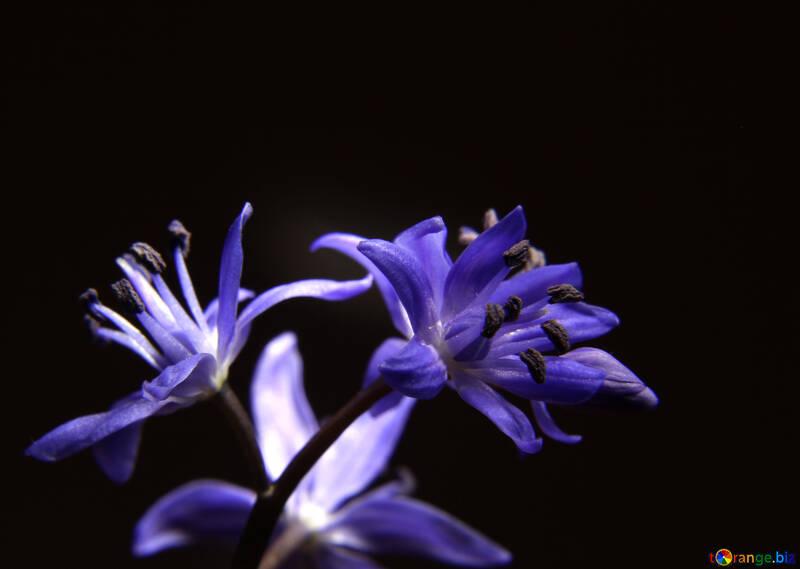 Темный фон с цветком №39006