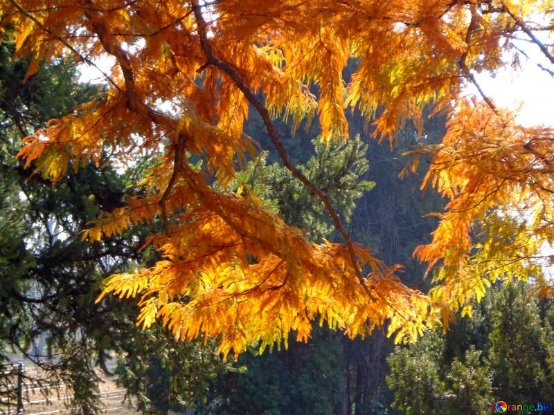 Bosque del otoño №39149