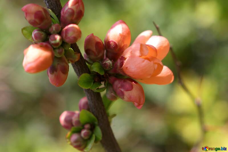 Flowering tree macro №39765