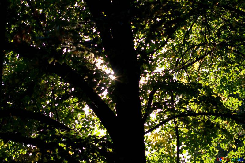 Feuillage ne transmet pas les rayons du soleil №39652